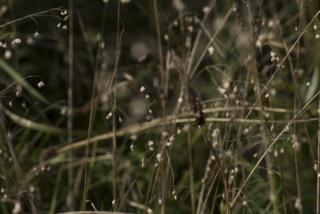 CG Hortus7 Brize media 8109175©7360 16bit 300dpi@7360 8bit 300dpi web